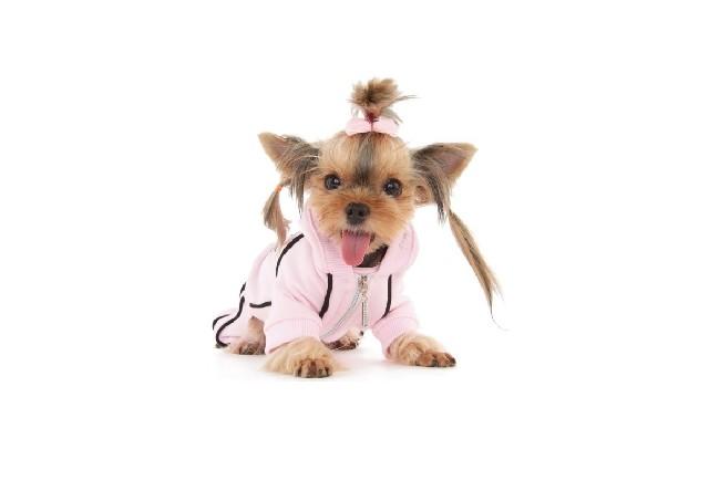 Sportovní souprava Chic Puppy Angel růžová vel. M